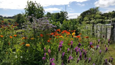 Flower garden on the Banceithin smallholding