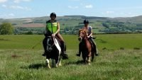 Horse riding in Ceredigion